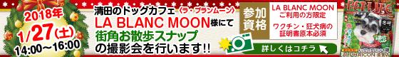 清田区のドッグカフェLA BLANC MOON様にて街角お散歩スナップの撮影会を行います!!